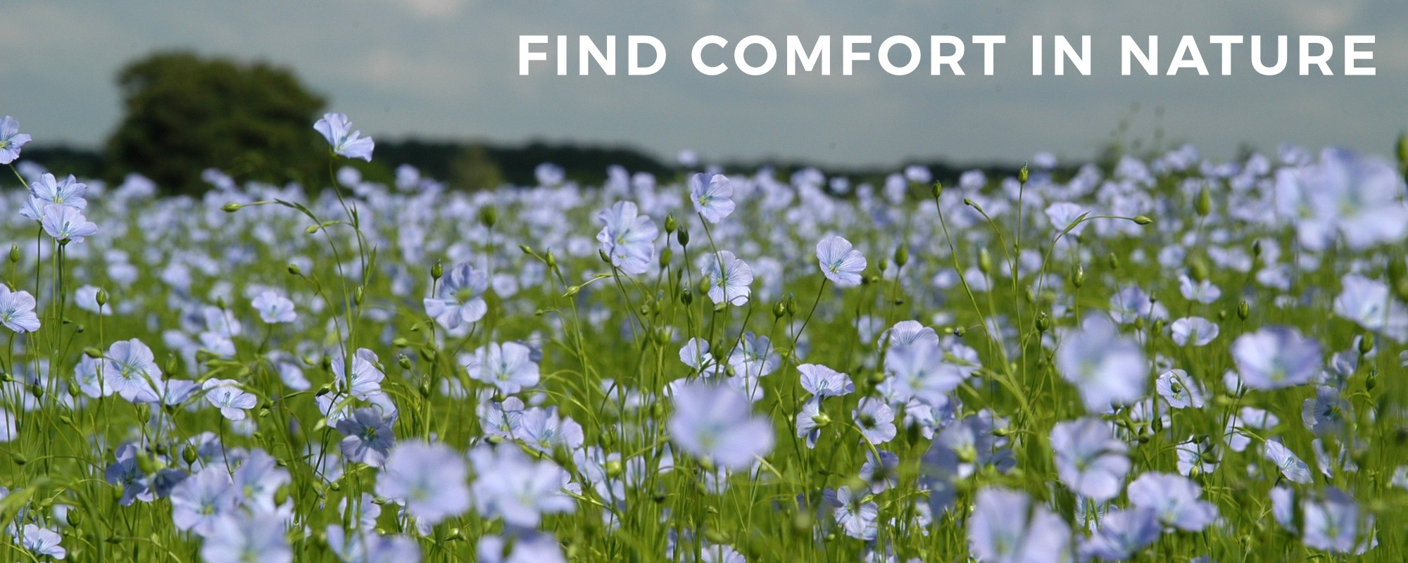 FIND COMFORT IN NATURE